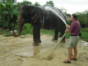 Kupanje slona