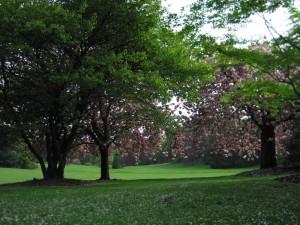 Japanske tresnje u bašti Laeken
