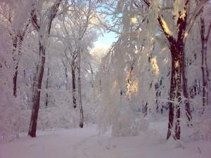 Zima na Avali