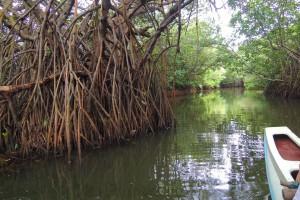 Tangalla- mali katamaran nas vodi kroz lavirint lagune