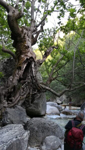 Usled posebne mikroklime, drvece deluje tropski i bajkovito